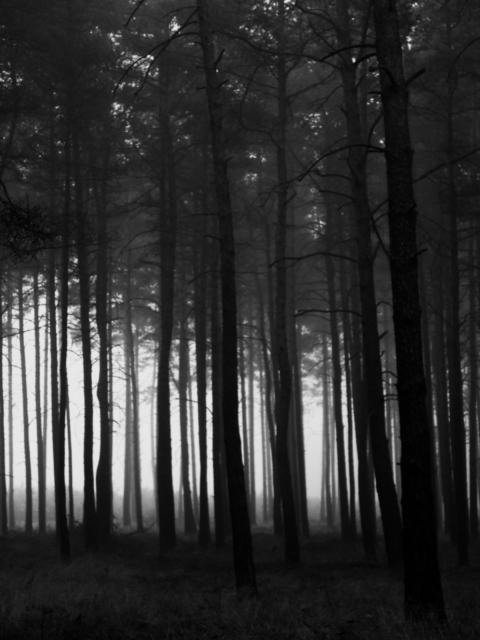 10030006 dark wood s